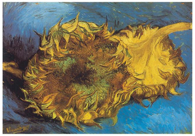 two-cut-sunflowers-vincent-van-gogh